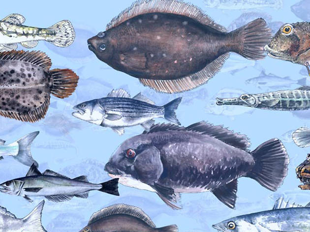 The Great Fish Count