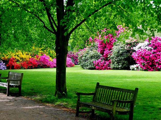 These are the best spots to see rhododendrons in London