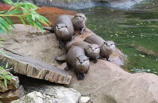 Otter group at ZSL London Zoo