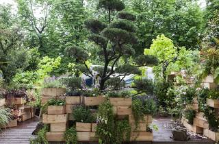 Jardin, jardin aux Tuileries