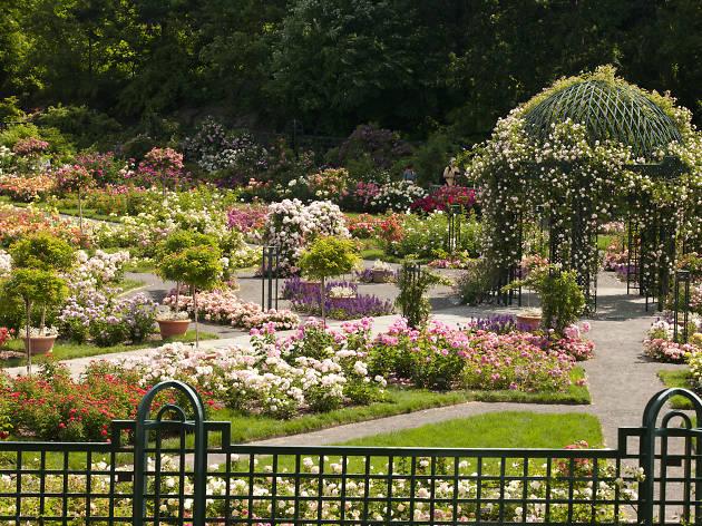 Rose Garden Weekend