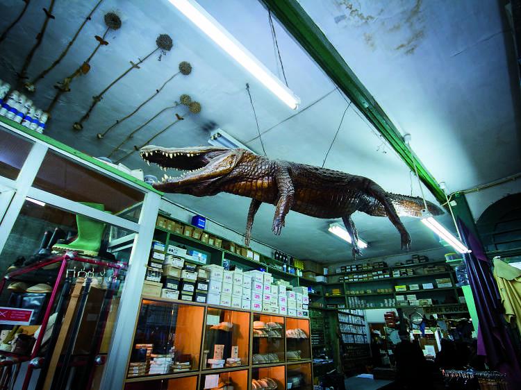 Há um crocodilo de cinco metros na Casa Crocodilo