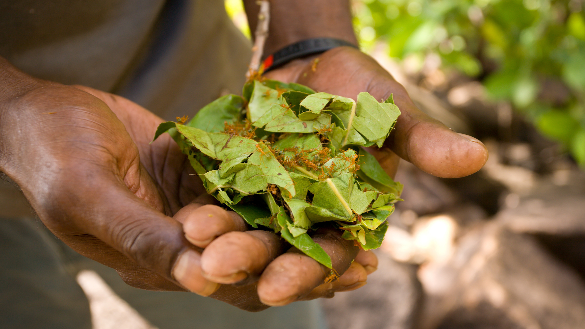 Northern Territory Encompassed Southbound