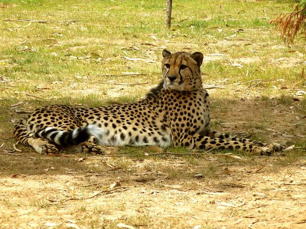 Zoo de Santo Inácio - Chita