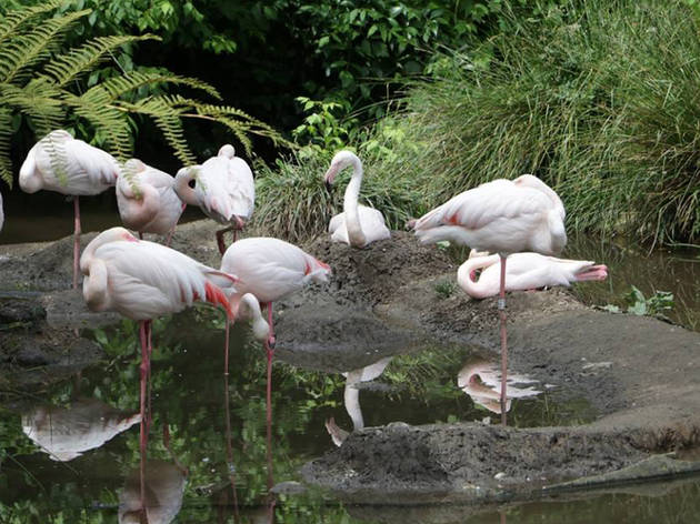 Zoo de Lourosa - Flamingos