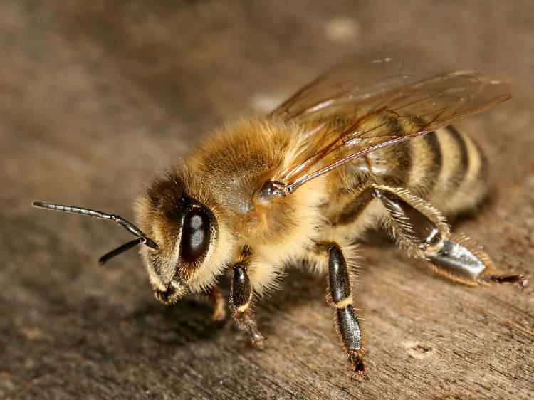 Insectos y repelentes