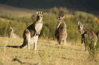 Tidbinbilla Nature Reserve Canberra