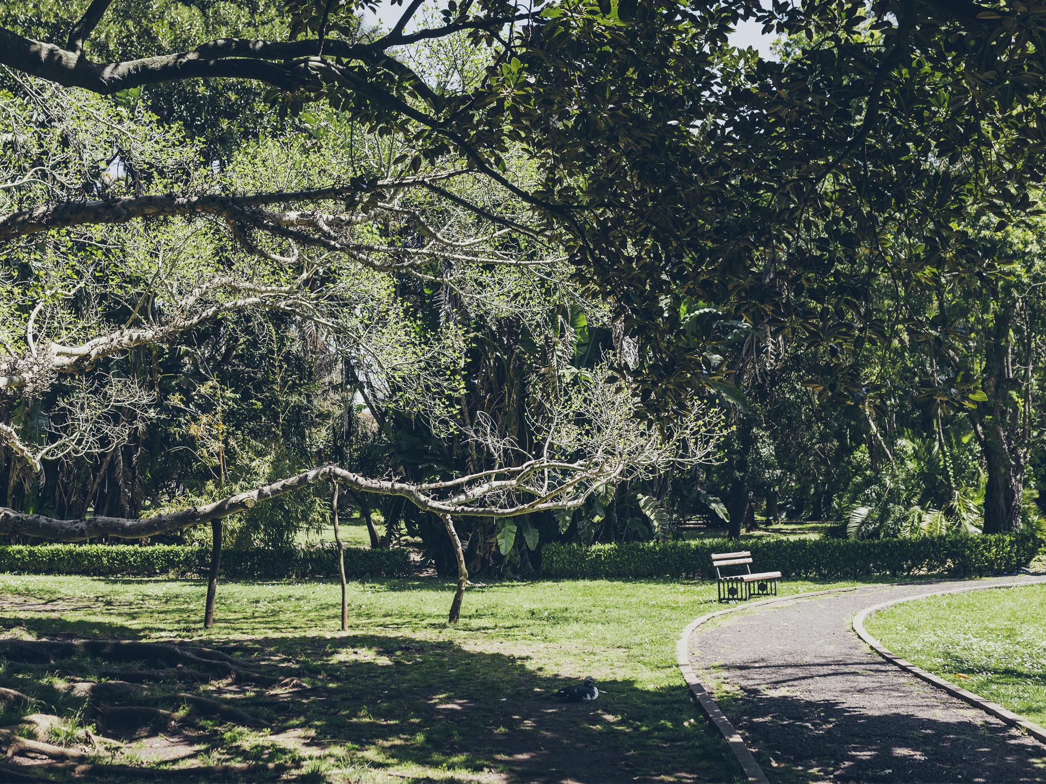 Jardim Botânico tropical de belém