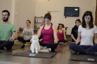 Us agraden els gats i el ioga? Aquesta activitat és la vostra!