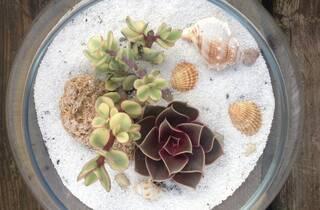 planta paixão-suculentas