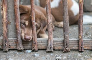 Barcelona també diu no a matança de gossos al festival de Yulin
