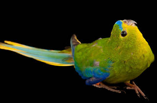 The National Geographic Photo Ark