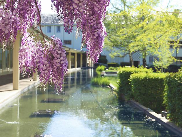 University House Canberra