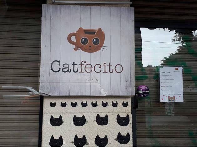 Catfecito (Foto: Karina González Fauerman)