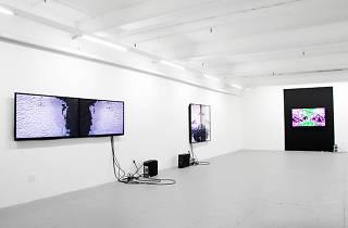 Microscope Gallery