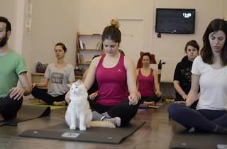 ¿Os gustan los gatos y el yoga? ¡Esta actividad es la vuestra!