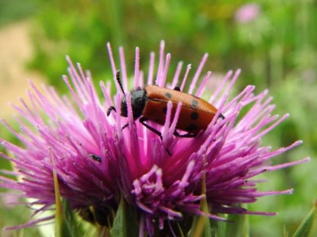 Collserola, tast de biodiversitat
