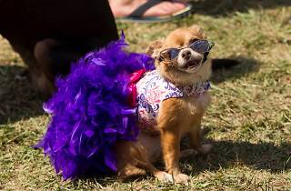 Dog in fancy dress