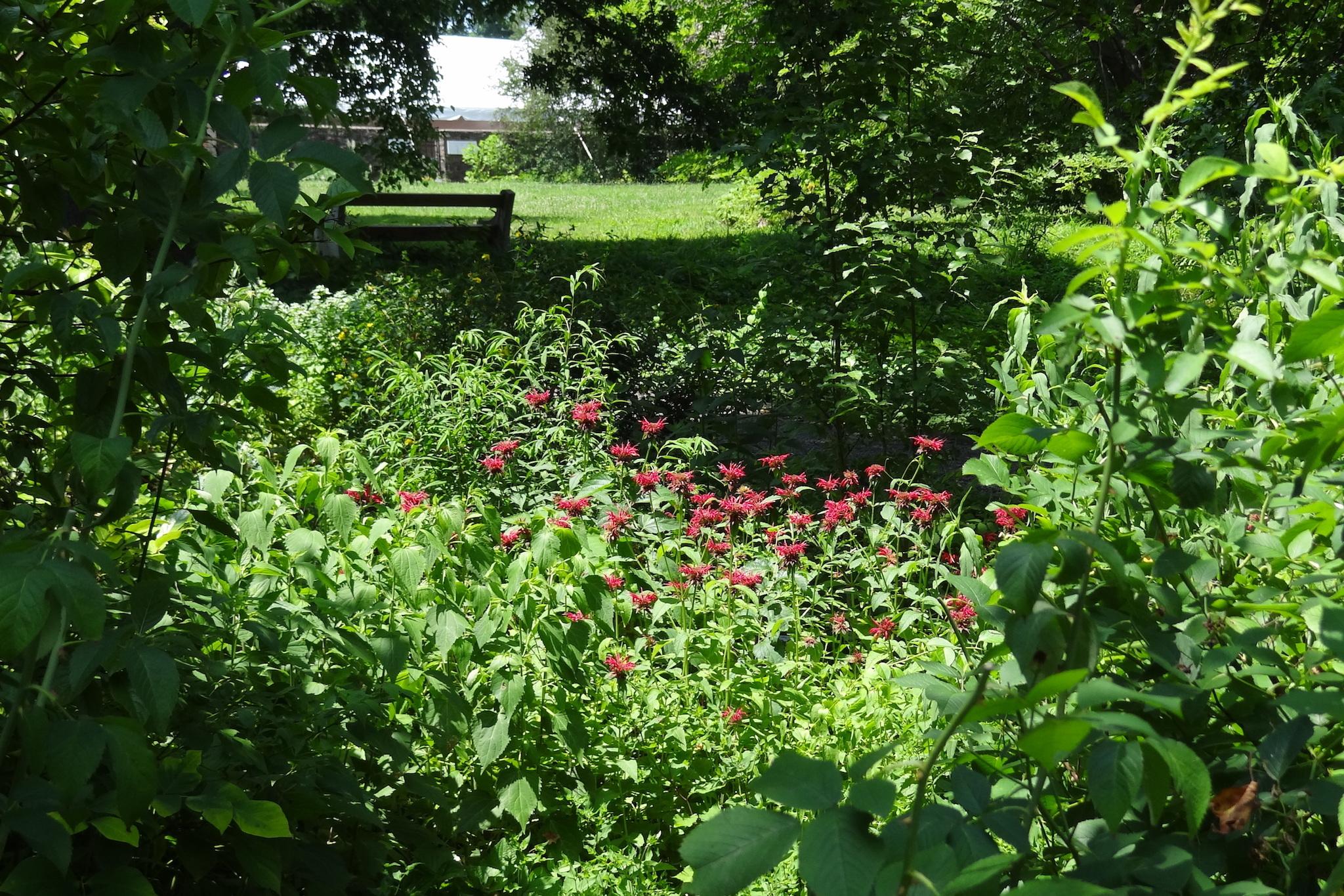 bartrams garden