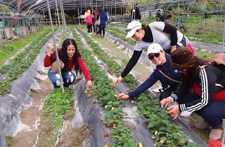 Rainbow Organic Strawberry Farm