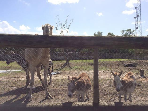 Everglades Outpost Wildlife Rescue