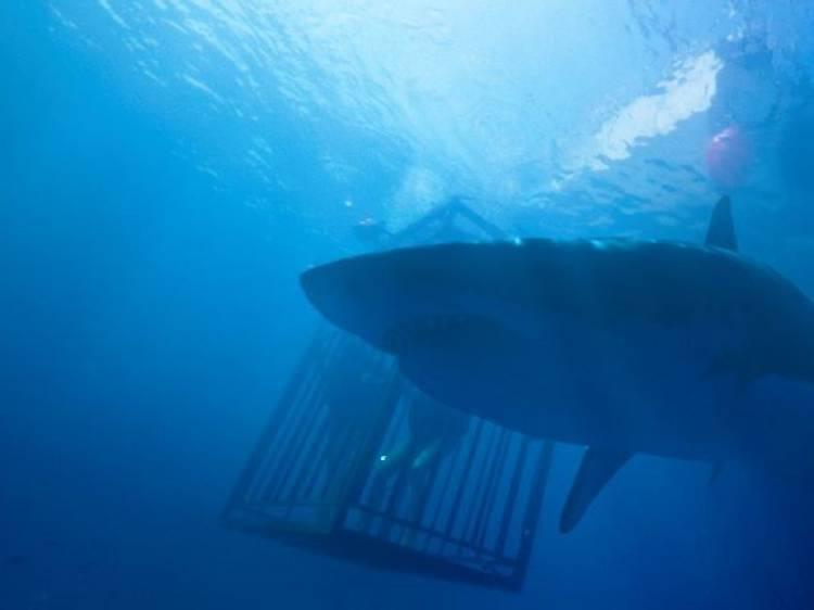 바다 속 상어와의 사투: 47미터