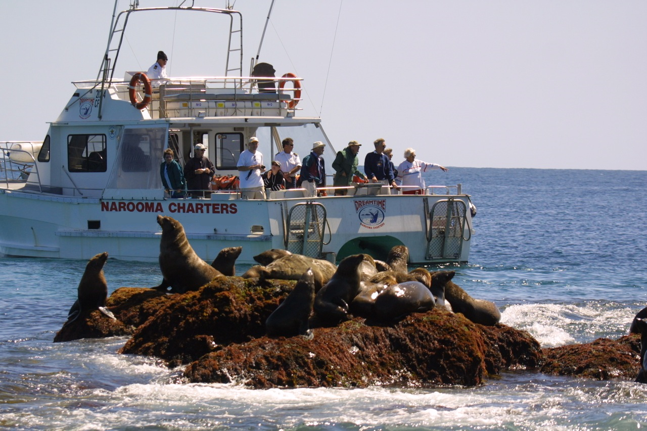 Narooma Charters boat with seals