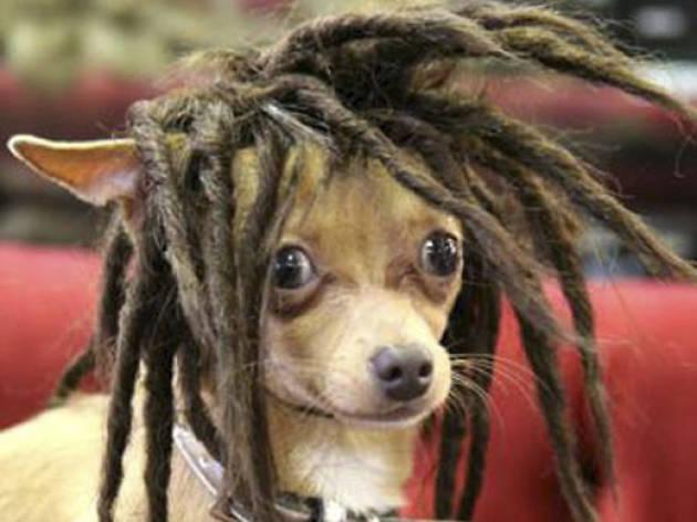 Weird Amazon: Dog wig dreads