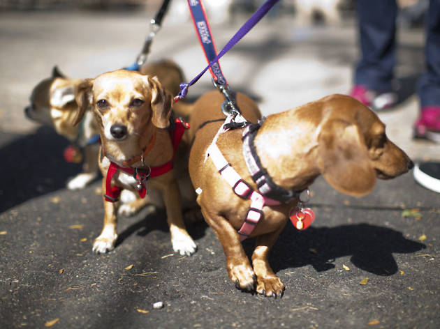 West Town is hosting a dog parade in July
