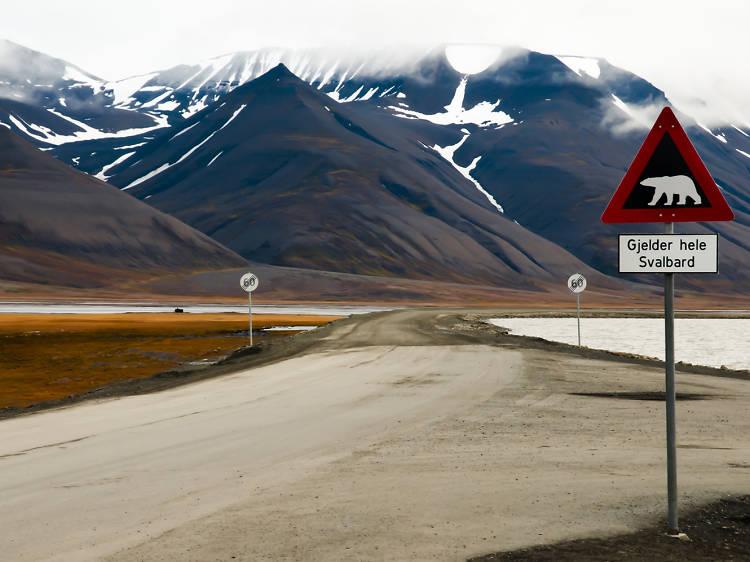 Dünya'nın en kuzeyine yolculuk: Svalbard