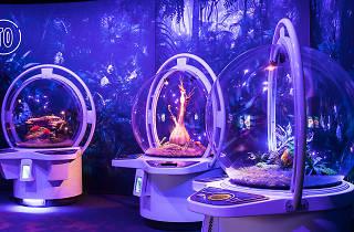 Avatar: Discover Pandora