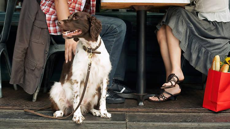 Restaurantes pet friendly en la CDMX