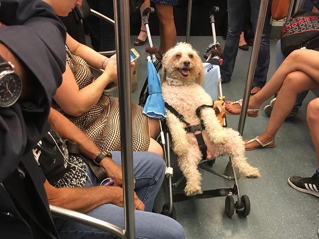 Al metro de Barcelona podem veure coses com aquesta [FOTOS]