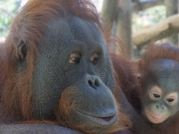Vols anar al zoo en família?