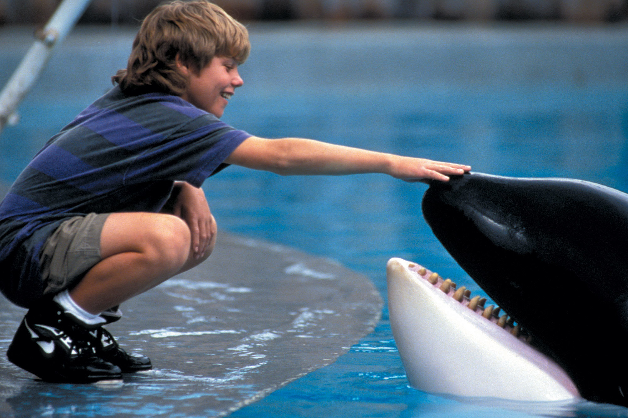 You can watch 'Free Willy' under the big new whale at the Natural History Museum this summer