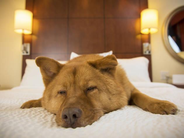 Hotel perro dogfriendly