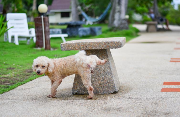 Mataró diu prou: 750 euros per no netejar els pixats dels gossos
