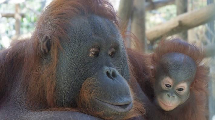 ¿Quieres ir al zoo en familia?