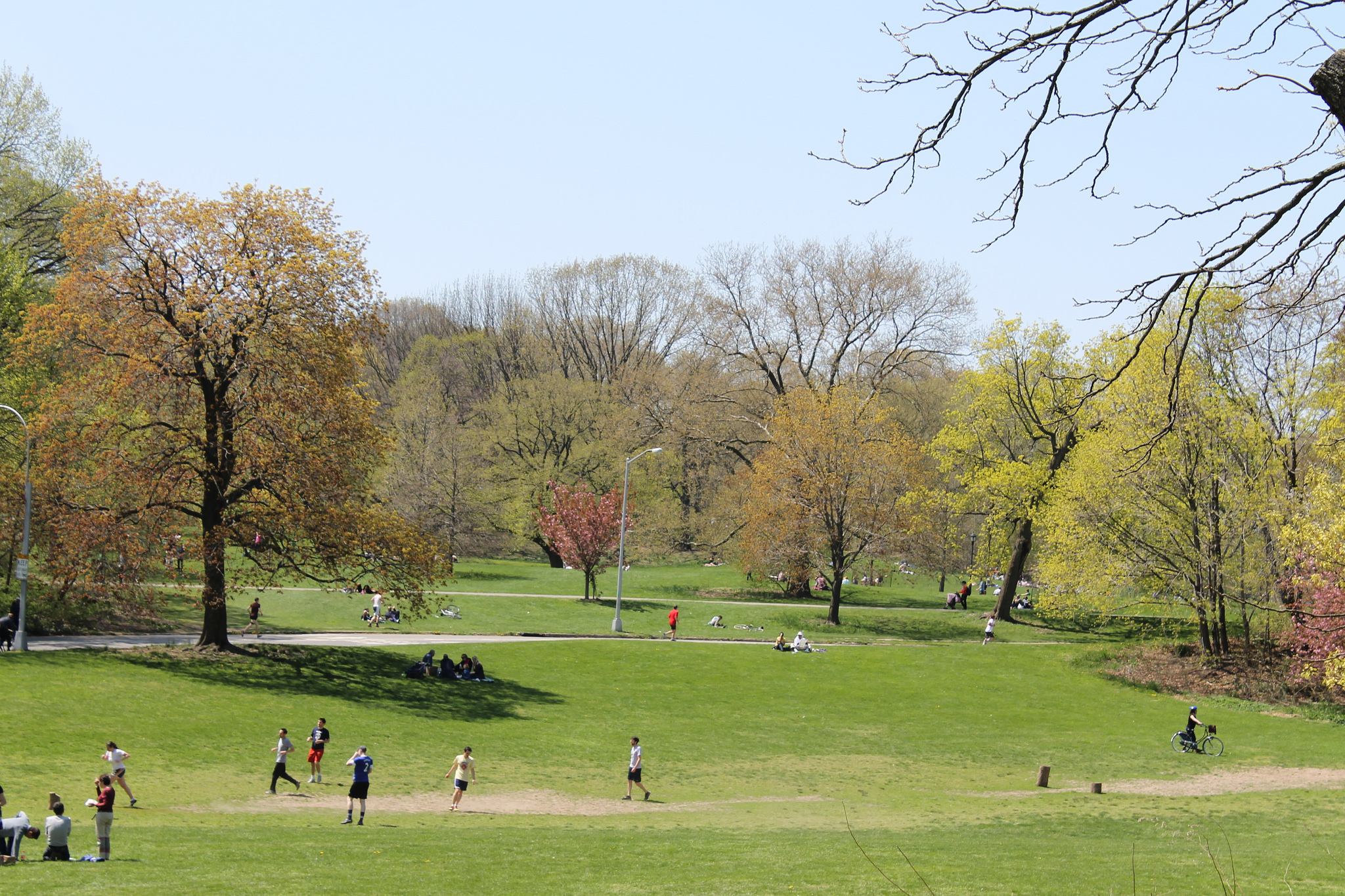 Cars will be banned from Prospect Park for the first time ever this summer