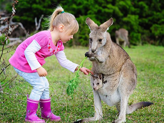 GanGaroo Australian Park