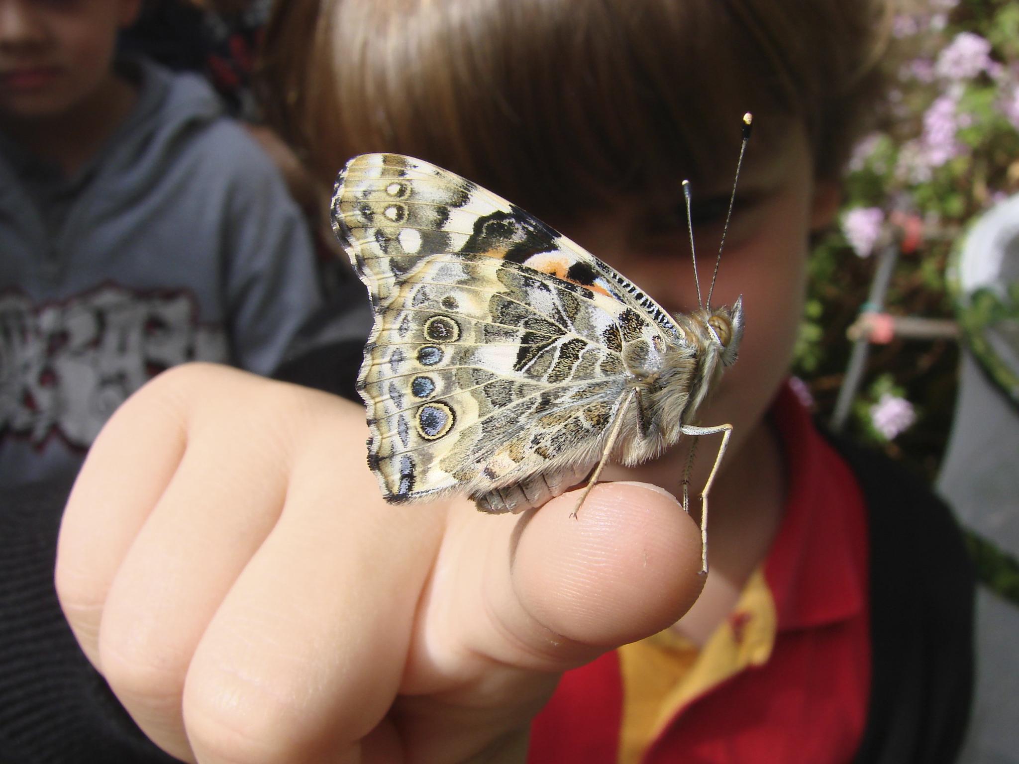 borboletário, muhnac