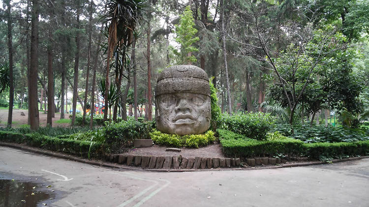 Cabeza olmeda en el Parque Hundido de la colonia Del Valle