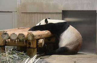 (公財)東京動物園協会提供