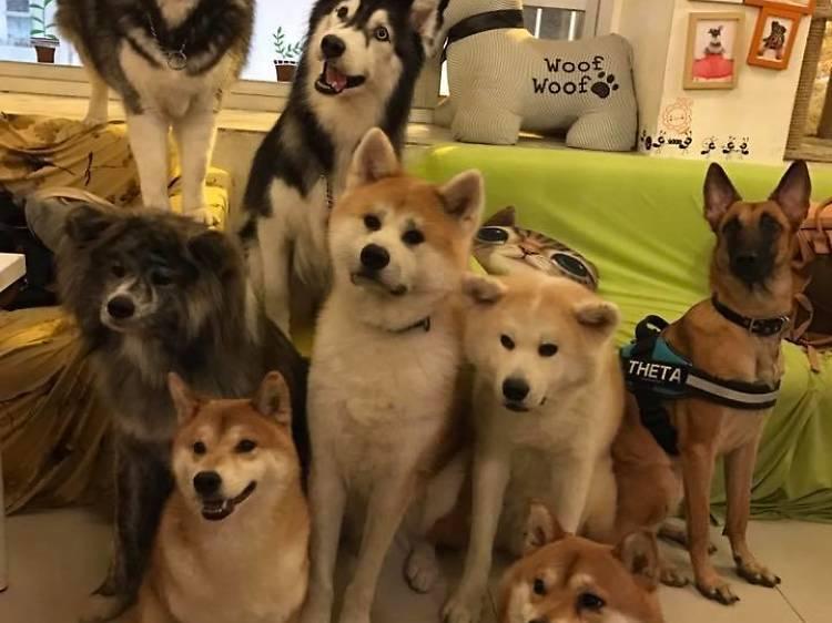 On Dog Dog Café