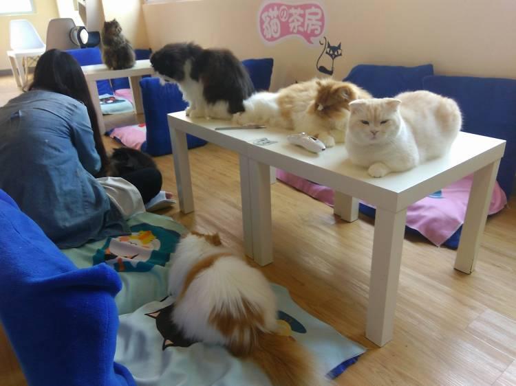 The Cats Tearoom