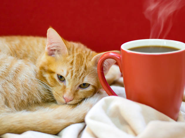 Cat with a coffee