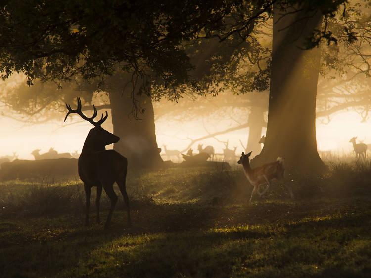 Spot deer in Richmond Park