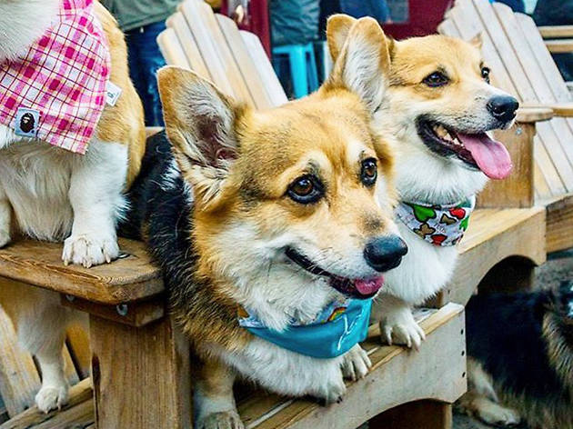Dogs at SPARK