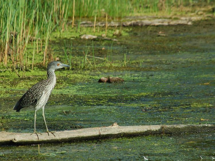 Birdwatch at Jamaica Bay Wildlife Refuge