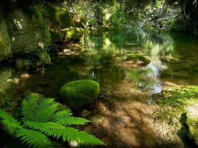 Un bany a les gorgues de Sant Aniol